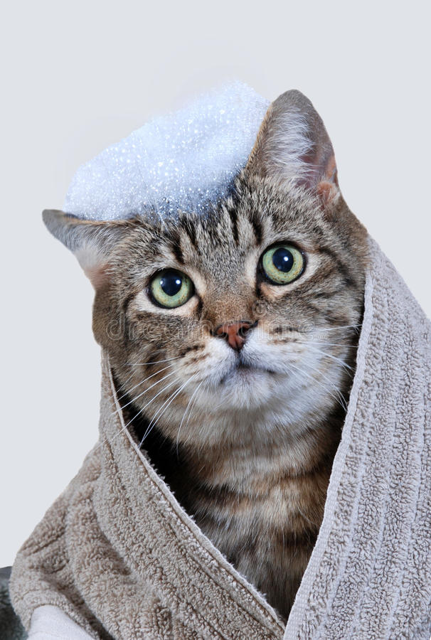 Download Cat bath stock image. Image of vertical, silly, groom - 23484275