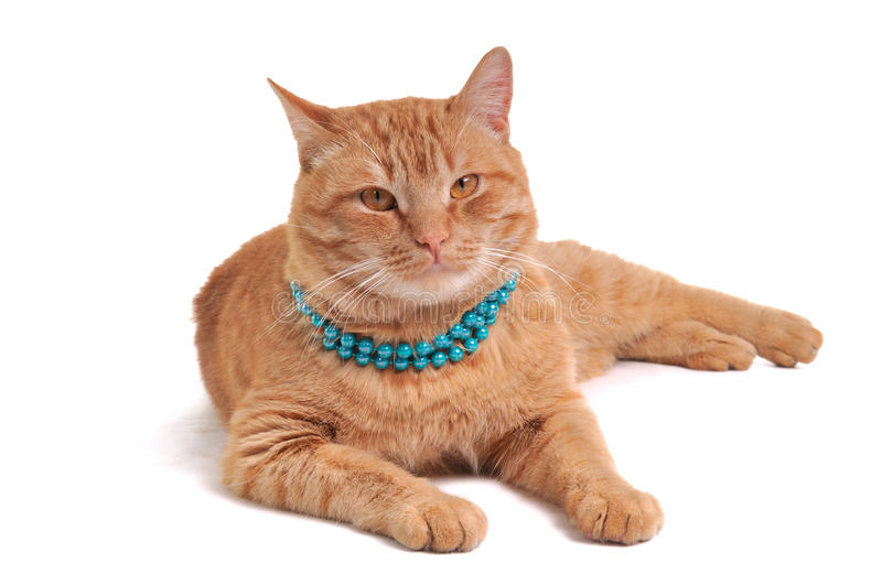 Cat In Beads Stock Photography