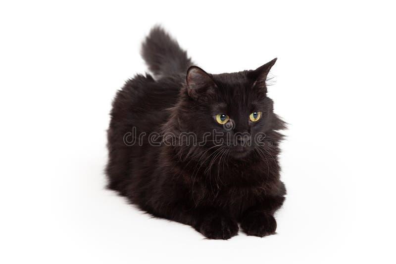 Cat With Beautiful Eyes Laying negra y mirada adelante fotografía de archivo libre de regalías