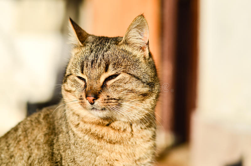 Download Cat Stock Photo - Image: 83717963