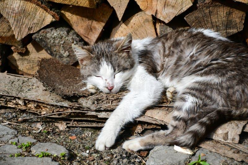 Cat. Beautiful lazy cat sleeping at sun near a fire woods stock photography