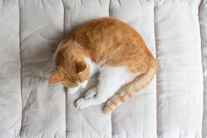 Cat on the bed. A cat on the bed beside window stock photo