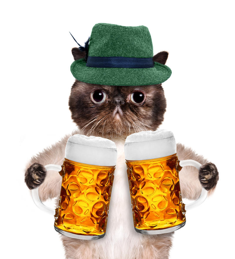 Cat with a beer mug. Isolated on white stock image