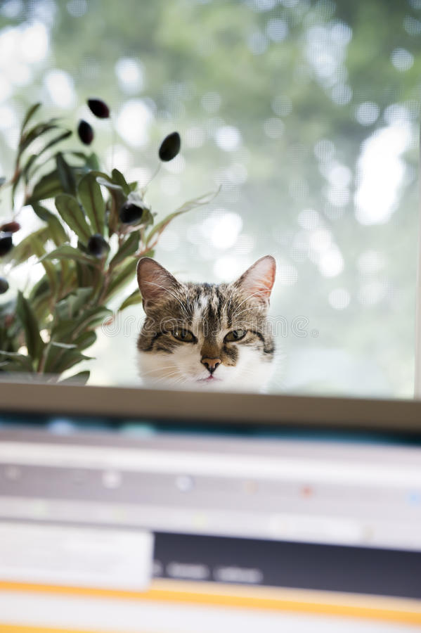 Cat behind a Monitor. Look at the Person who is working on Computer stock images