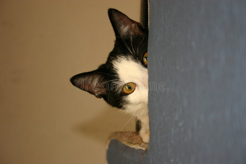 Download Cat Behind The Wall In The House Stock Photo - Image: 561818