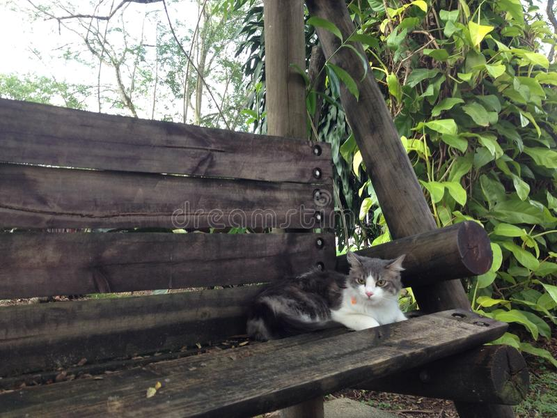 Cat in a bench royalty free stock images