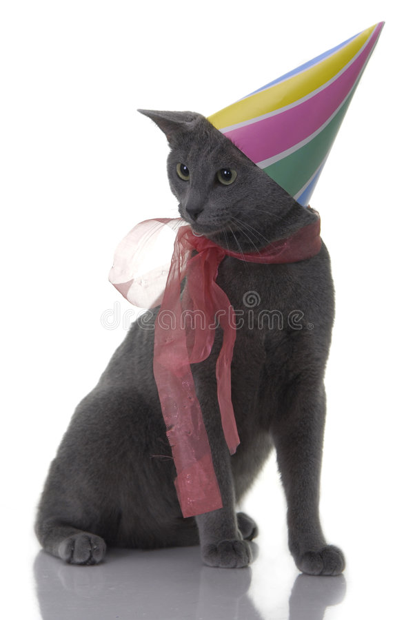 Cat with birday hat and ribbon stock photo