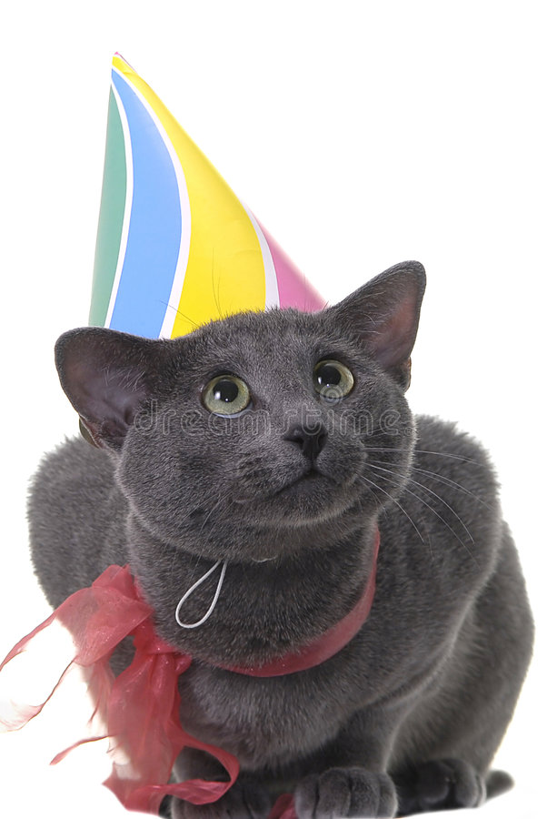 Cat with birday hat and ribbon. Cat with birthday hat and ribbon isolated on white stock photography