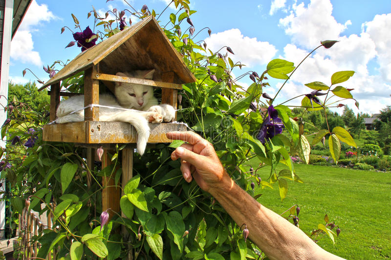 Cat in a birdhouse royalty free stock image