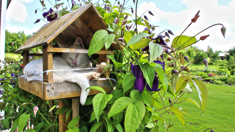 Cat in a birdhouse stock photos