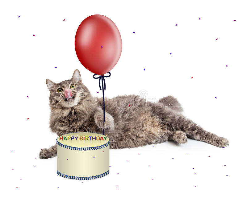 Cat With Birthday Cake and Balloon. Funny cat licking lips while laying next to a birthday cake and holding a red balloon with party confetti falling down stock image
