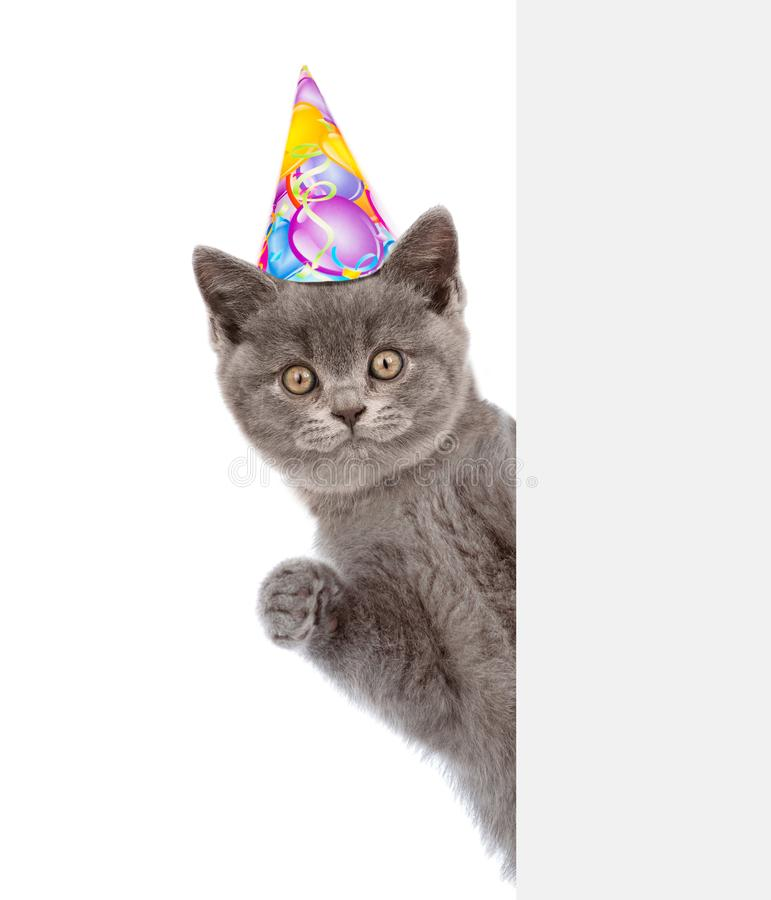 Cat in birthday hat looking out because of the poster. isolated on white background.  royalty free stock images