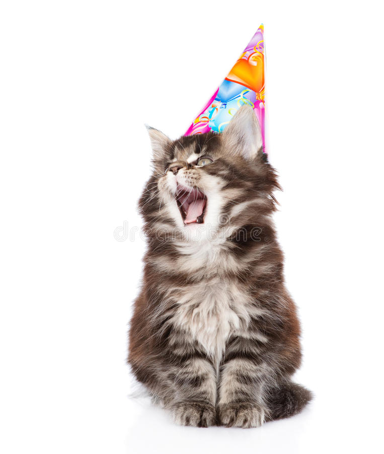 Cat in birthday hat with open mouth. isolated on white background.  royalty free stock images