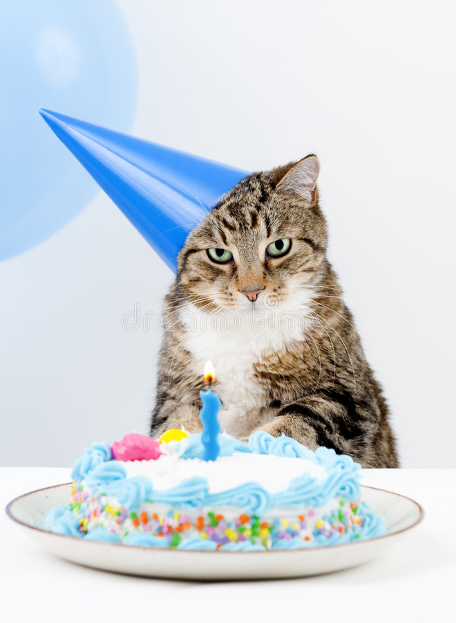 Cat Birthday Party. Cat Happy Birthday party with cake and balloons stock photos