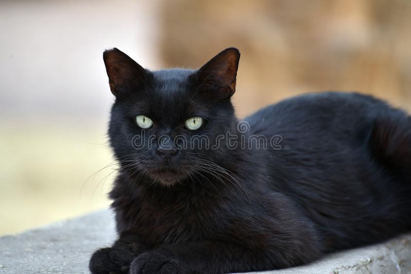 Cat, Black Cat, Black, Mammal stock photo