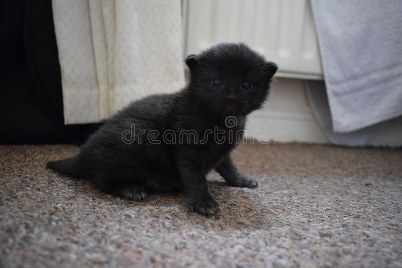 Cat, Black, Black Cat, Mammal stock photos