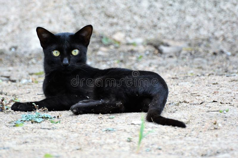 Cat, Black Cat, Mammal, Small To Medium Sized Cats stock images