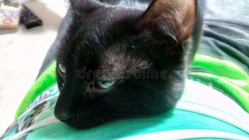 Cat. Black sleep chill boring stock photos
