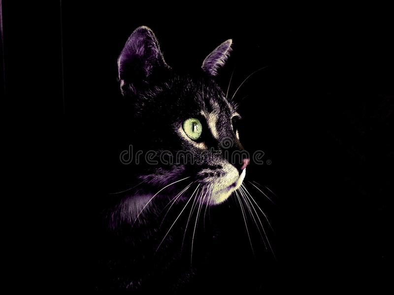 Cat, Black Cat, Black, Whiskers stock photos