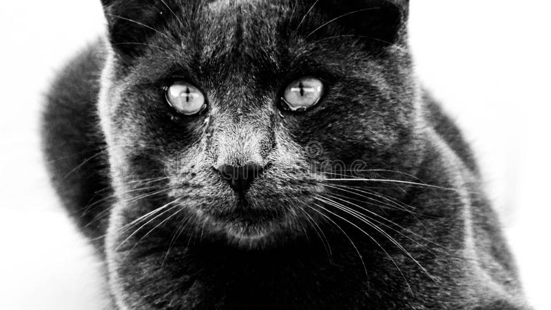 Cat, Black Cat, Whiskers, Black Free Public Domain Cc0 Image