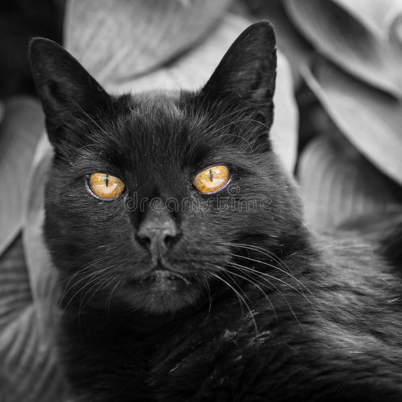 Cat, Black Cat, Whiskers, Black stock photo