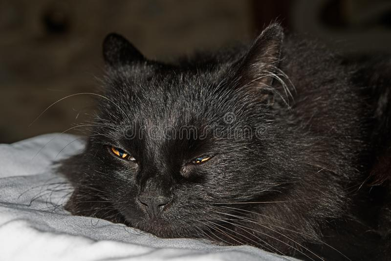 Cat, Black Cat, Whiskers, Black royalty free stock photo