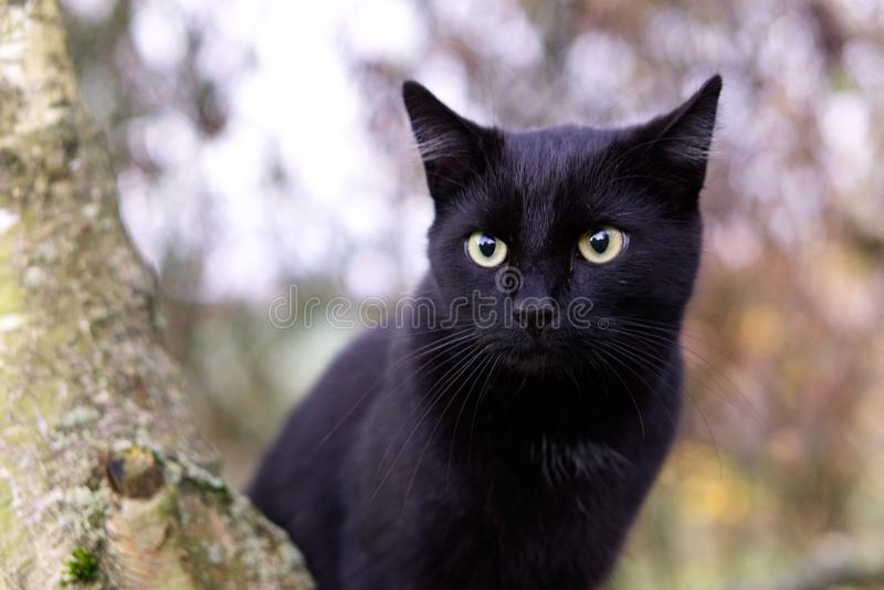Cat, Black Cat, Whiskers, Mammal stock images
