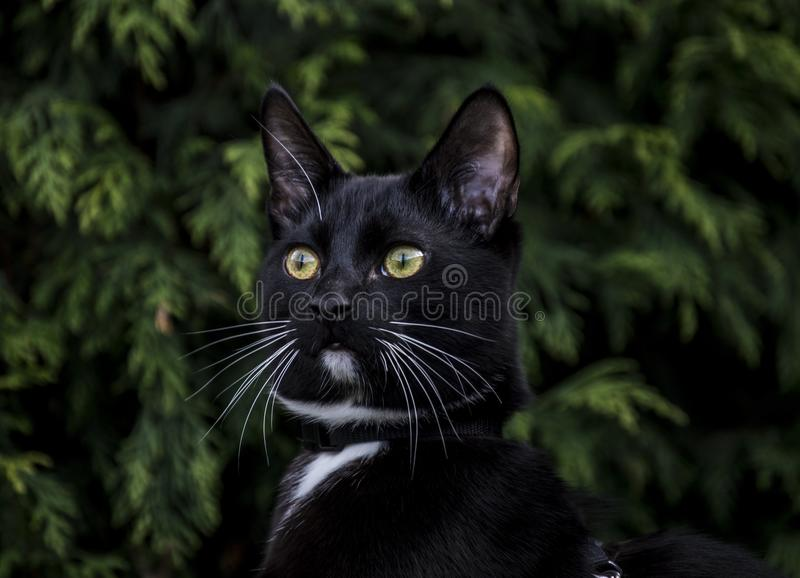 Cat, Black Cat, Whiskers, Mammal stock image
