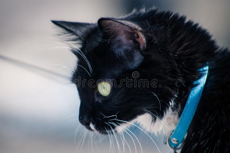Cat, Black Cat, Whiskers, Mammal stock photography