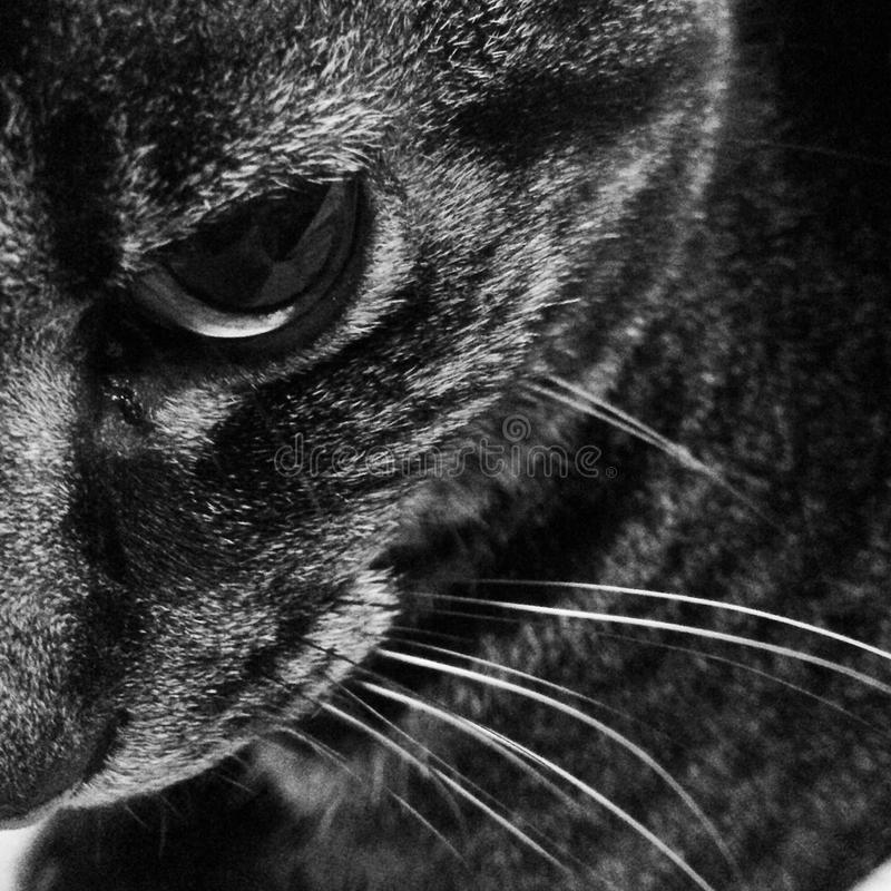 Cat black and white royalty free stock images