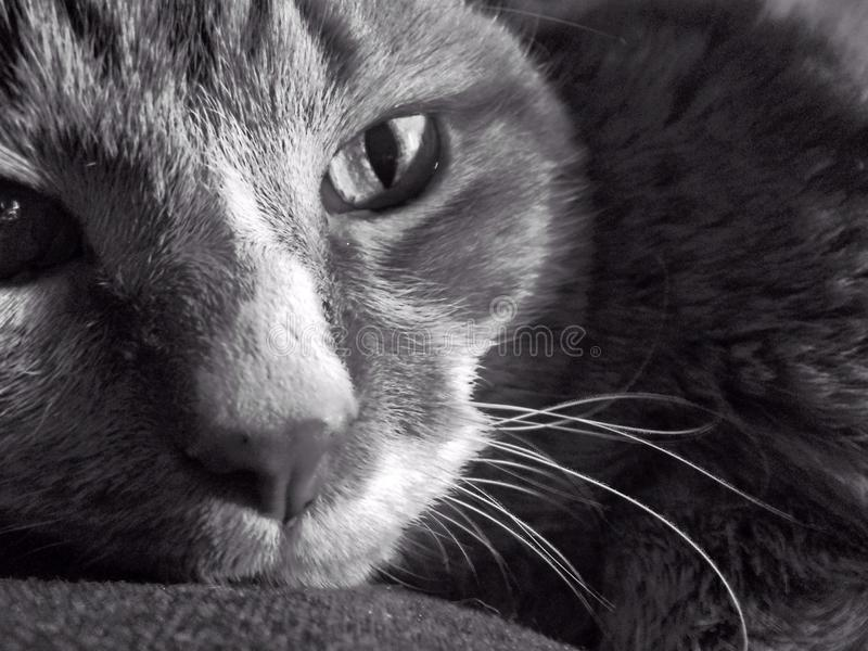 Cat. In black and white royalty free stock photography