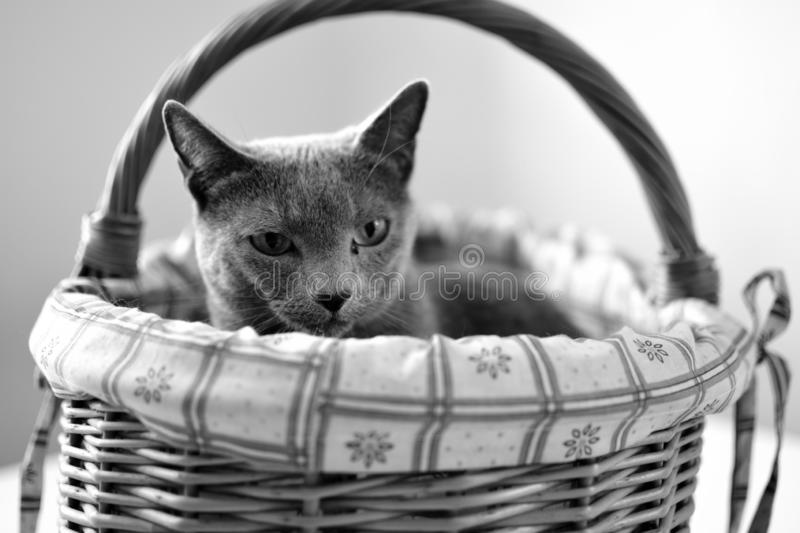 Cat at black and white royalty free stock photo