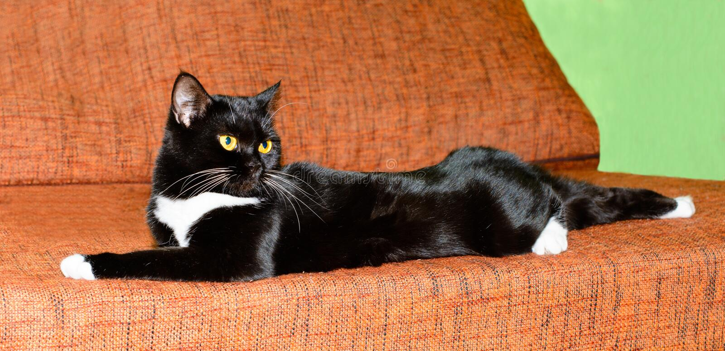 Cat black and white. stock photos
