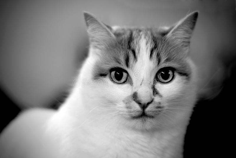 Cat in black and white stock image