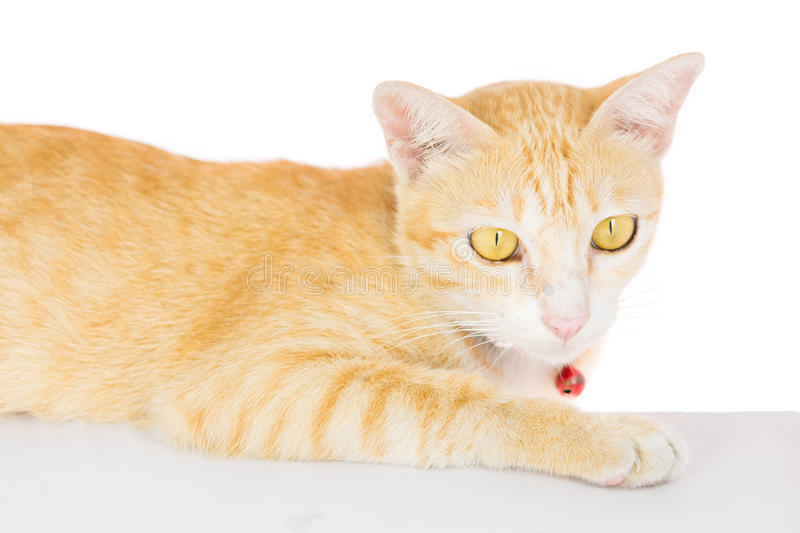 Cat blank poster board isolated royalty free stock images
