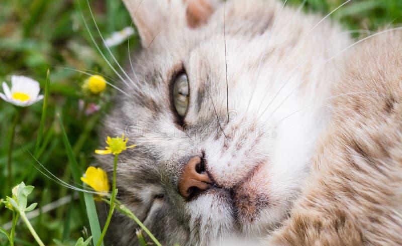 A cat blink an eye lying on the grass. A cat blink an eye while lying on the grass royalty free stock photos