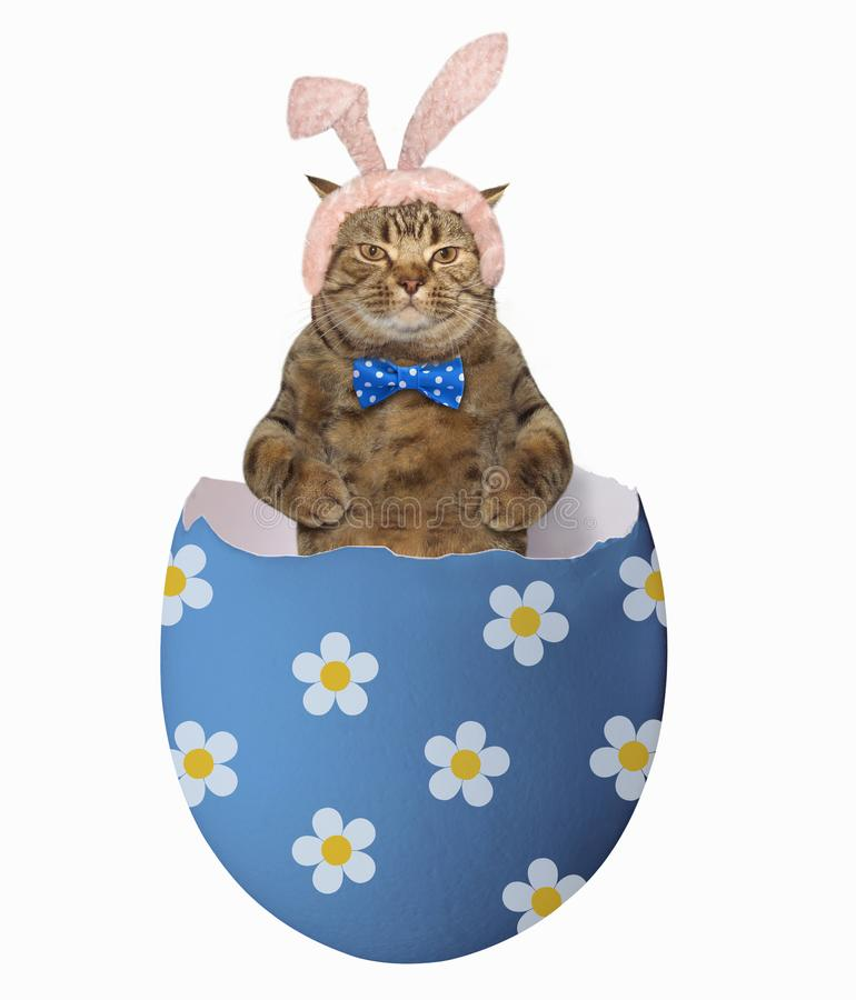 Cat in the blue easter egg stock photography