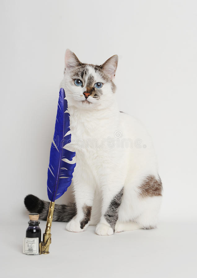 Cat with blue quill pen and ink stock photo