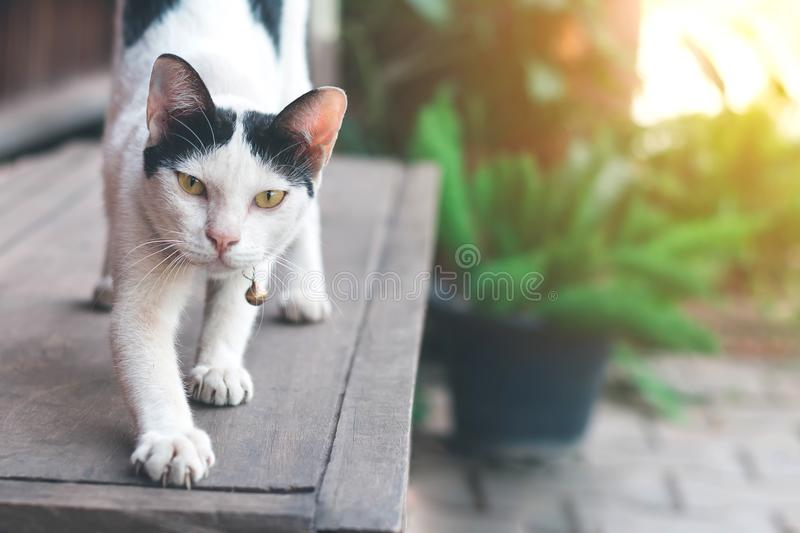 A cat on nature background with copy space royalty free stock photo