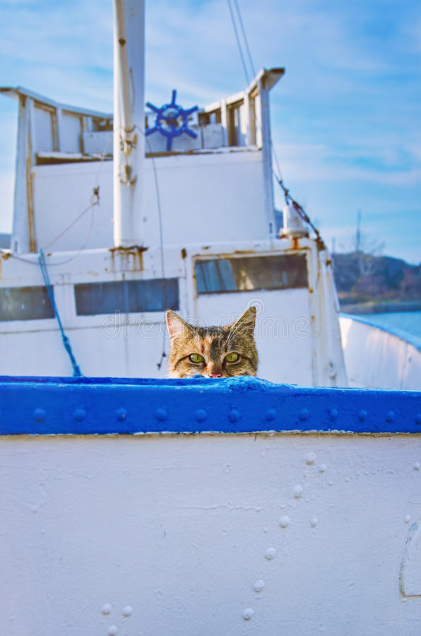 Cat On Board stock photo