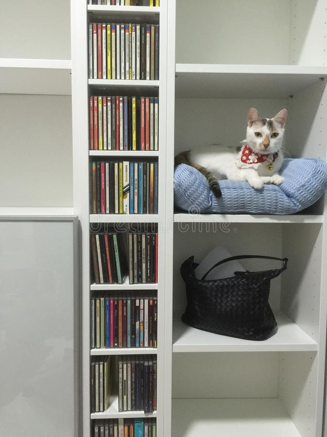 cat in a bookshelf royalty free stock photography