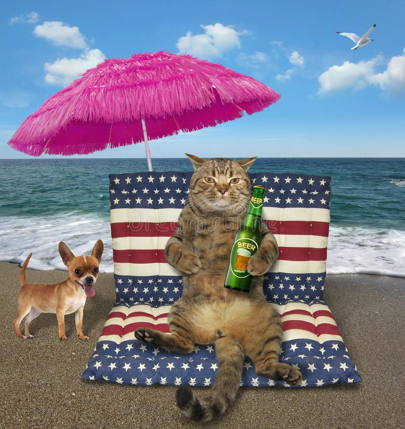 Cat with a bottle of beer sits on an airbed stock images