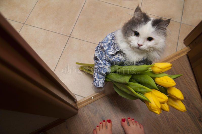 Cat with a bouquet at the feet of mistress.  royalty free stock images
