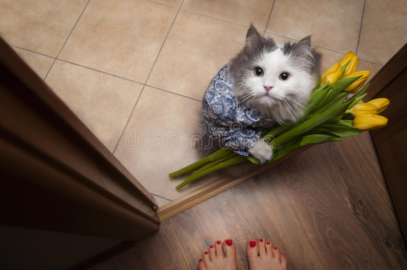Cat with a bouquet at the feet of mistress.  royalty free stock photography