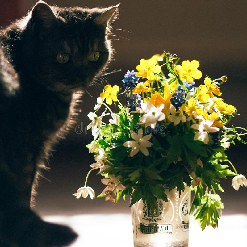 The Cat And The Bouquet Of Flowers Stock Photo - Image of white ...