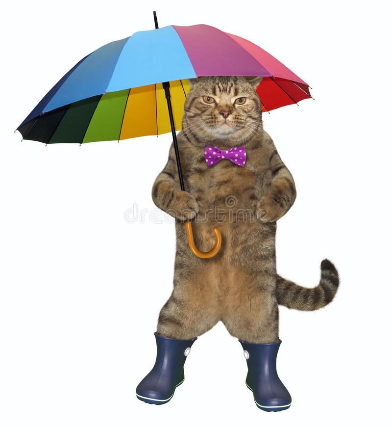 Cat with a color umbrella 2 stock photo
