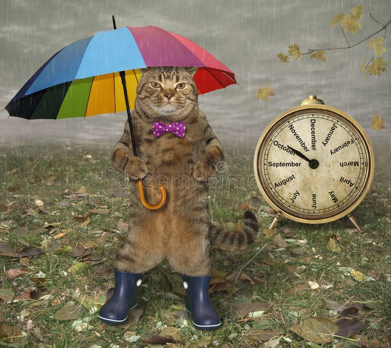 Cat with umbrella near a clock royalty free stock images
