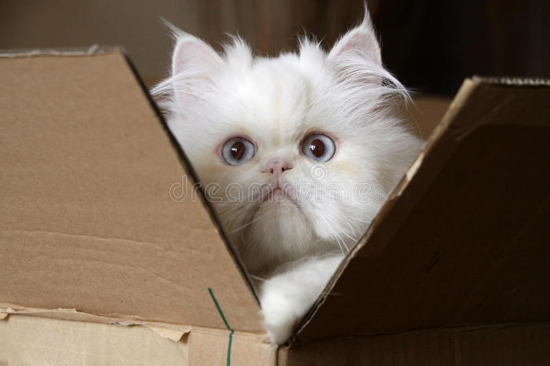 Cat in box stock photography