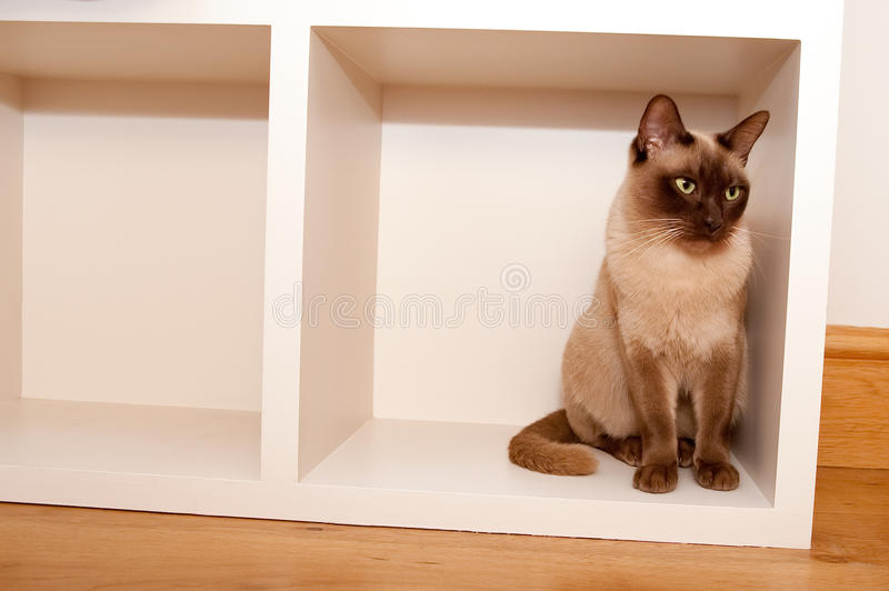 Download Cat in a box stock image. Image of peace, patience, animal - 17772245