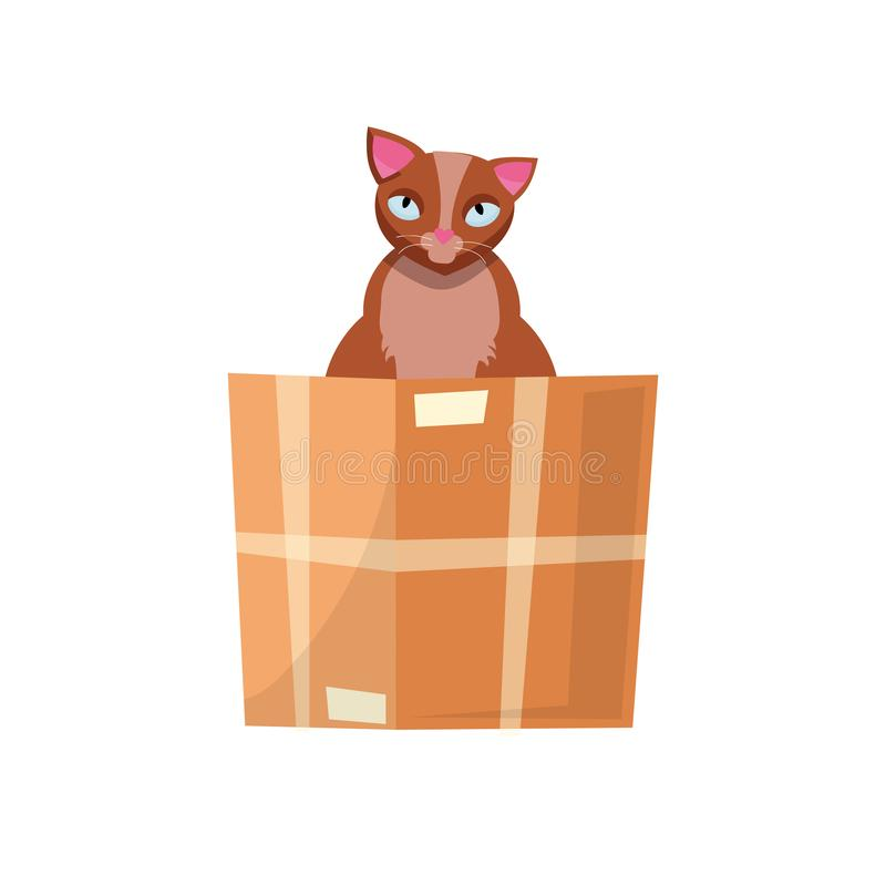 Cat in the box. Cat in a cardboard box. Kitty inside carton box. Playful curious cat pet looking out of his hiding. Cartoon kitten vector illustration